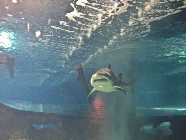 Go Fish At The Greater Cleveland Aquarium Detroit Moxie