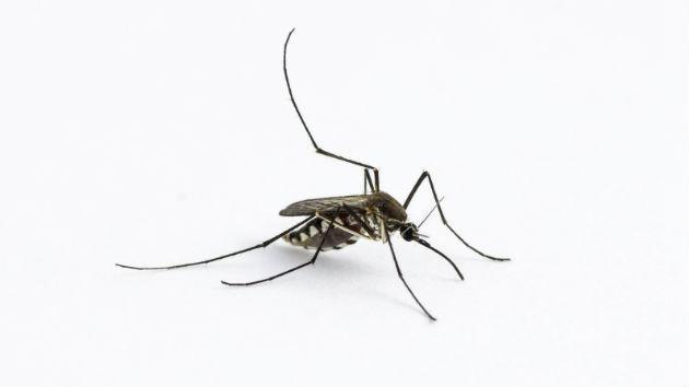 Mosquitoes Spreading Viral Disease in US