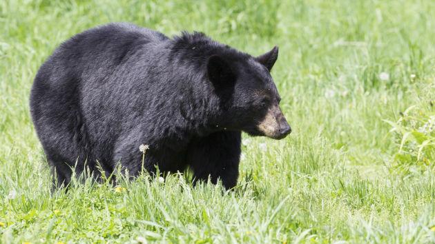 Florida Teen Recounts Escaping Bear Attack with Dog's Help