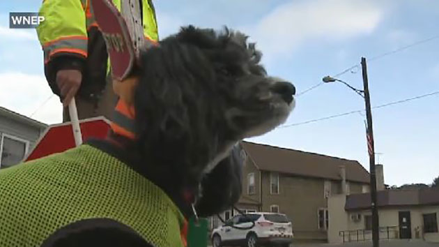 Patches the Crossing Guard Dog 'Fired' by School District