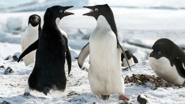 'Breakthrough' and 'Penguins' get a jump on the weekend's new releases