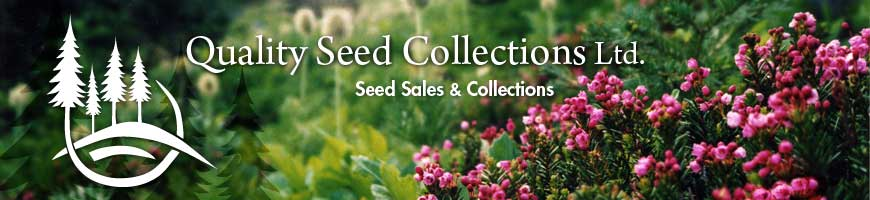 Quality Seed Collections Ltd.