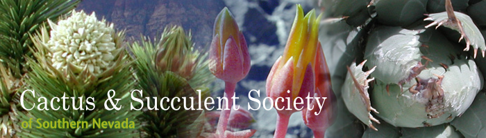 The Cactus & Succulent Society