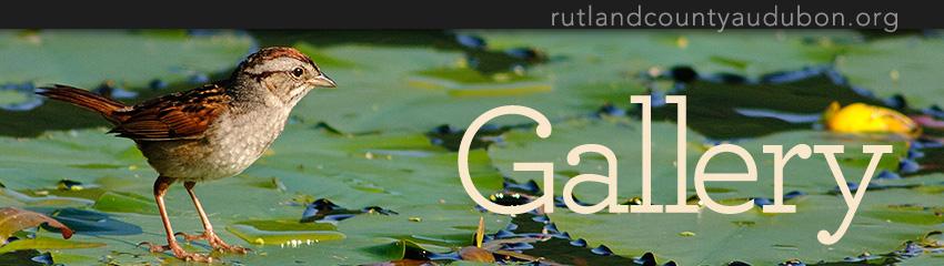 Rutland County Audubon Society