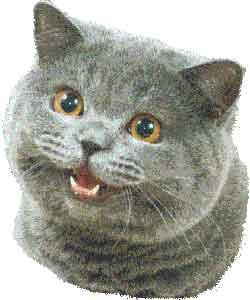 happycat.jpg?__SQUARESPACE_CACHEVERSION=