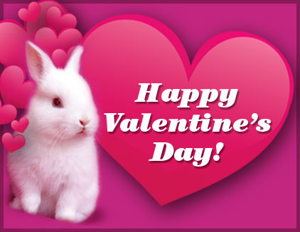 bunny world foundation - more top news - give some bunny love this, Ideas