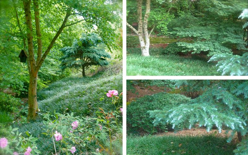 How to Combine Plants Debs Garden Debs Garden Blog – Woodland Garden Plants