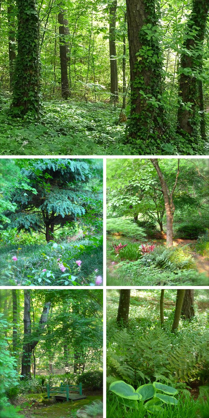 A Little Bit Of Jungle Deb 39 S Garden Deb 39 S Garden Blog