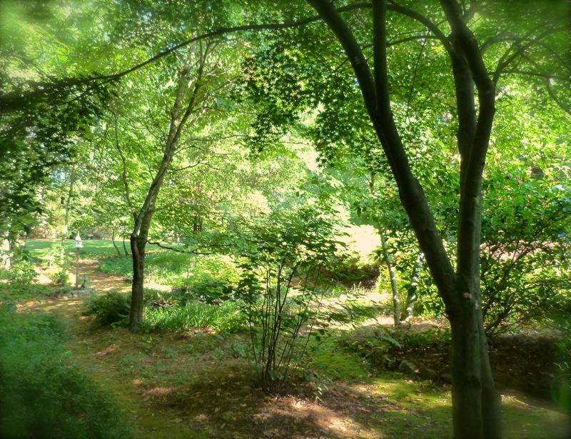 Patterns In The Woodland Garden Deb 39 S Garden Deb 39 S