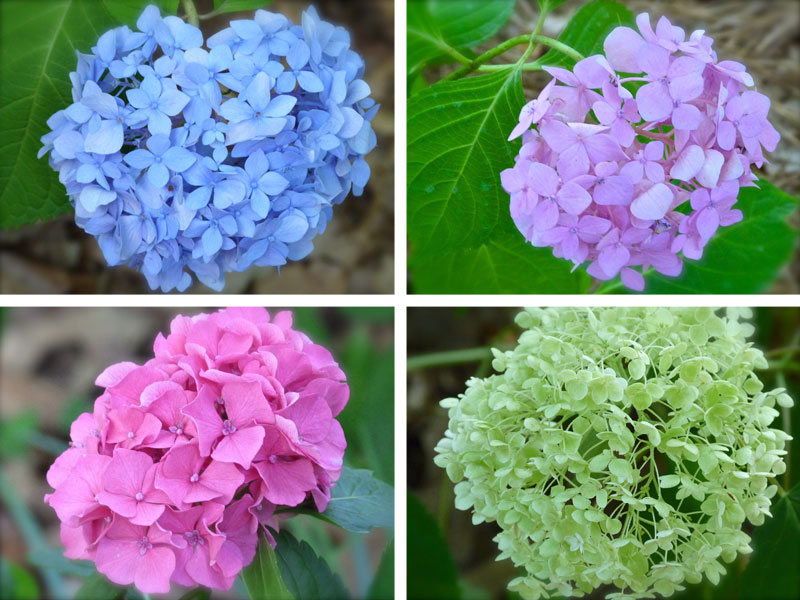 marvelous shady flowers Part - 7: marvelous shady flowers images