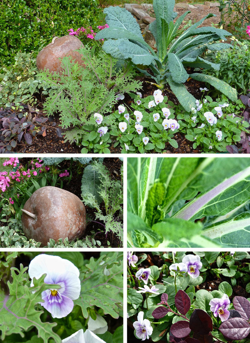 Debs garden debs garden blog dinosaur kale lacinato lorapetalum purple pansy flowering kale peacock red asian jasmine and pink dianthus grow together in a fall arrangement dhlflorist Gallery