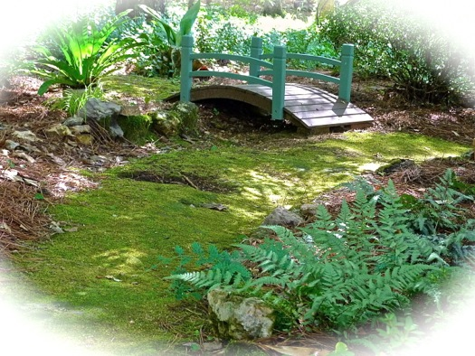 By Adding Lots Of Organic Matter To The Planting Hole Of Each Fern, By  Mulching, And By Being Diligent To Keep The Soil Moist, I Have Boosted My  Success ...