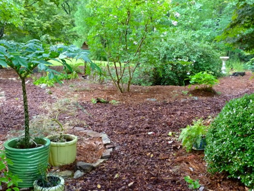 This View Of The Front Garden Shows Wood Chip Paths And Pine Straw Used As  Mulch.