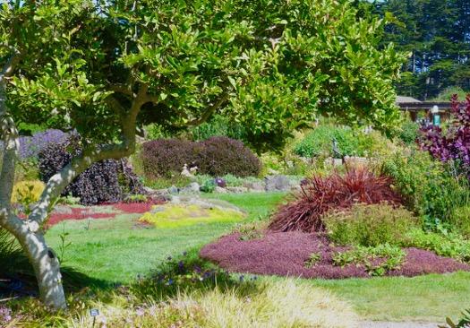 Deb\'s Garden - Deb\'s Garden Blog