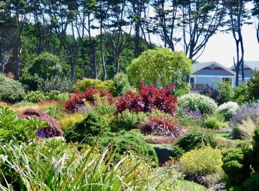Mendocino coast botanical gardens deb 39 s garden deb 39 s - Mendocino coast botanical gardens ...
