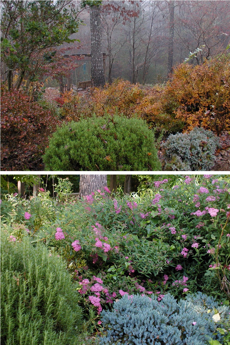 Spirea a great low maintenance shrub deb 39 s garden deb for Low maintenance fall flowers