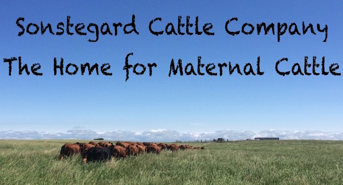 Sonstegard Cattle Company