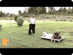 Lexi Hayden's FINE-TUNED CANINES - Florida professional dog training and dog behavior counseling