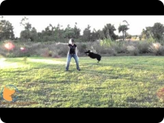 Chopper's amazing dog tricks and multiple=