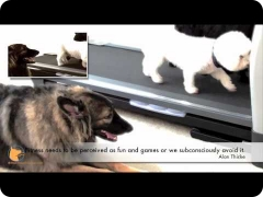 Dogs enjoying treadmill exercise and proper socialization - Florida Board and Train camp