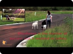 Off-leash dog training fun in Florida - FINE-TUNED CANINES (Naples, FL and Fort Myers, FL area)
