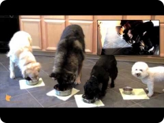 FINE-TUNED CANINES fine-dining: Florida Board and Train doggie camp - good dog manners and self-control skills