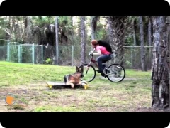 Thor, the German Shepherd male dog, and self-control around bicycles (Naples, FL)
