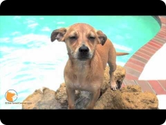Naples Florida dog training - swimming and confidence building for dogs – Maddie the Miniature Pinscher
