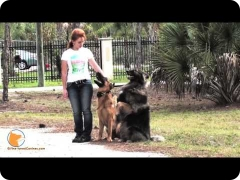 FINE-TUNED CANINES : canine oasis - dog training and dog psychology in Naples, Florida