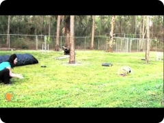 Introduction to retrieving and holding objects with Charlie, the Jack Russell Retriever mix and confidence building - FINE-TUNED CANINES, Naples, FL dog training