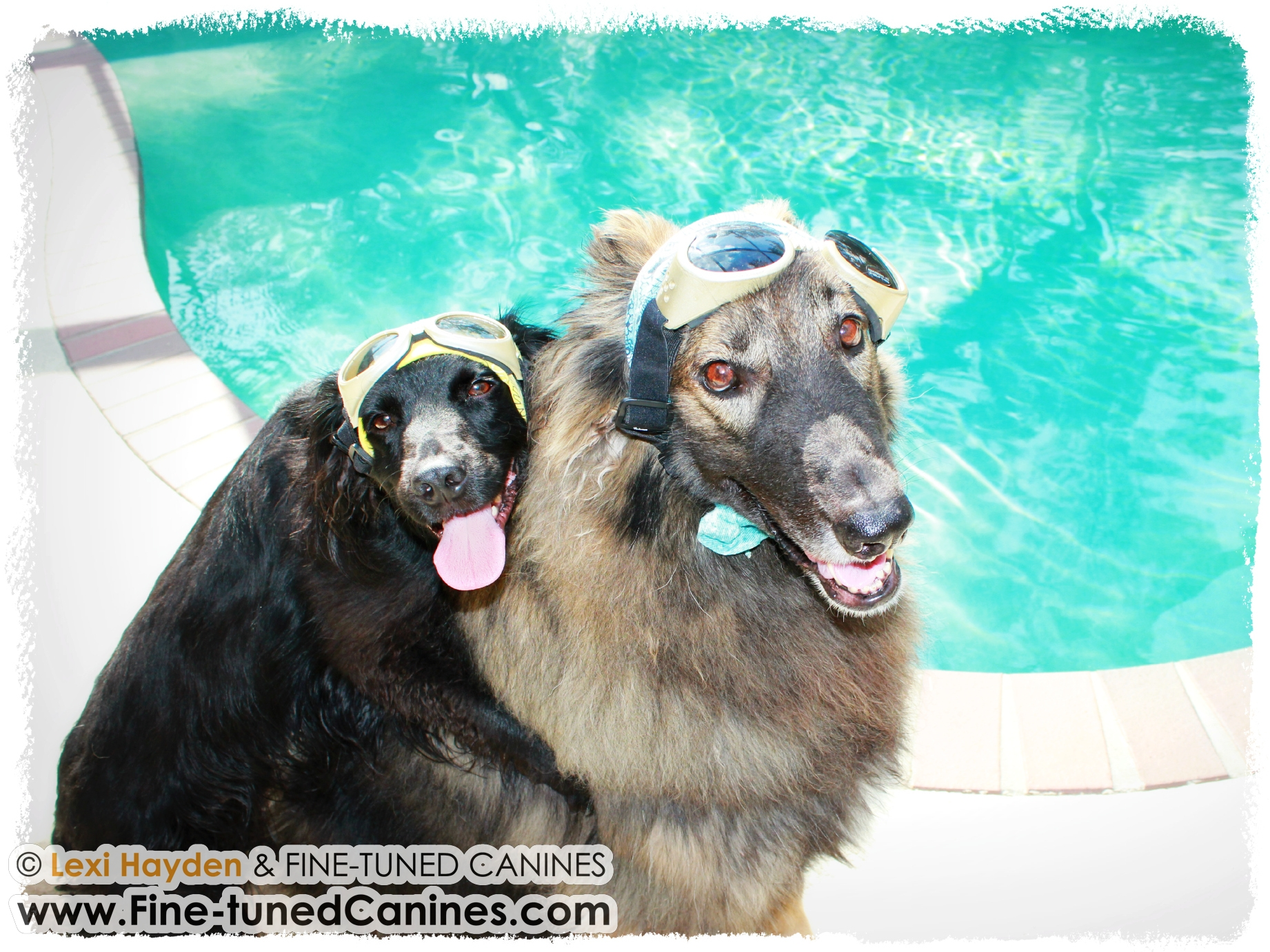 It Is Hot To Keep The Dogs Cool Articles About Dogs And