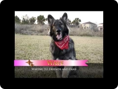 Amazing dog tricks - including moonwalking canine-human team!