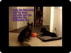 Halloween with dogs: Halloween dog manners, real world obedience training and safety