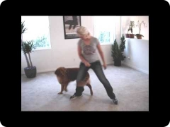 Cody's Tricks - trick training with a rescue dog fostered and trained by Lexi Hayden (now adopted)