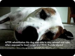 Thunderstorm and noise phobias in dogs - a case study with a Hurricane Katrina shelter dog