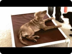 Puppy training (Board and Train program) with FINE-TUNED CANINES in Florida (Naples, FL & Fort Myers, FL areas)