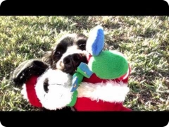 Holiday Season with FINE-TUNED CANINES - trailer