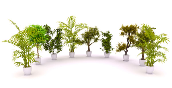 Indoor air cleaning plants