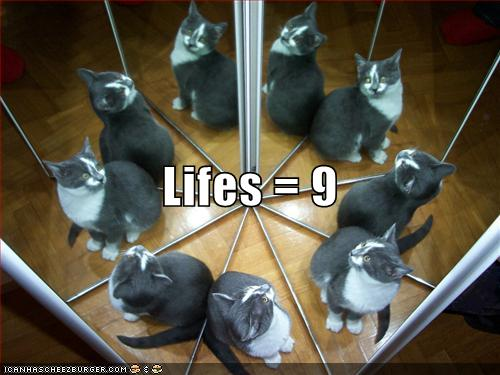 funny-pictures-cat-has-nine-lives.jpg?__