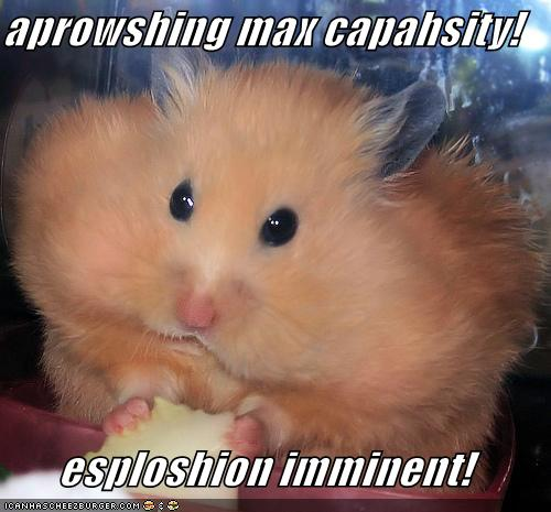 funny pics of hamsters