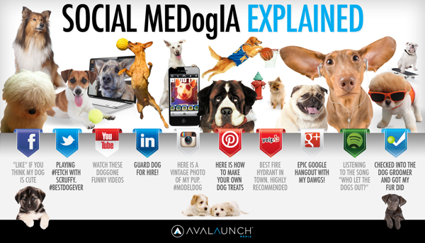 Social Media Explained Dog infographic