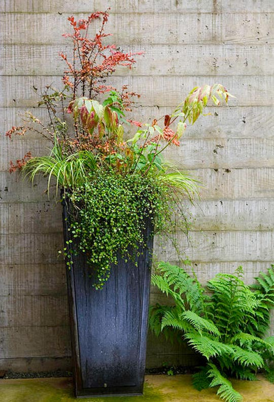 Kenneth Philp Landscape Architects Luxury Fall Planters at Home Infatuation Blog