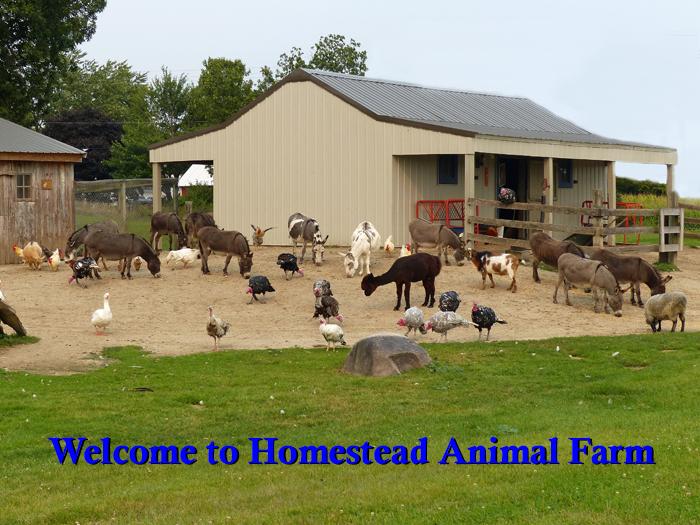 Homestead Animal Farm