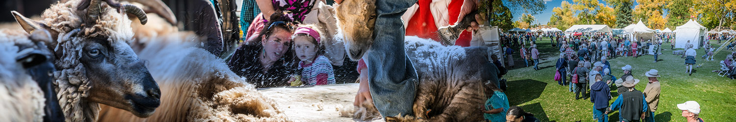 Taos Wool Festival @ Kit Carson Park, Taos, NM | Taos | New Mexico | United States