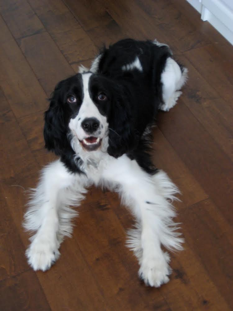Success Stories - Go Fetch! Dog Training - San Francisco