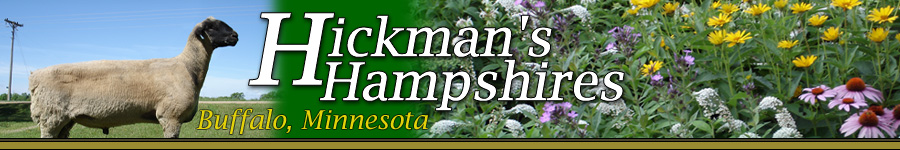 Hickman's Hampshires