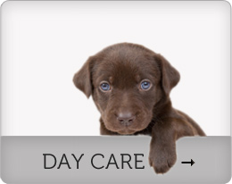 Dog Day Care Toronto