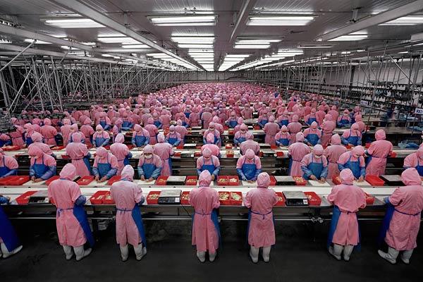 http://thomaspmbarnett.com/storage/chinese-chicken-factory.jpg?__SQUARESPACE_CACHEVERSION=1276040158575