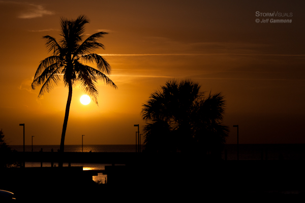 Coconut palm tree setting sun.