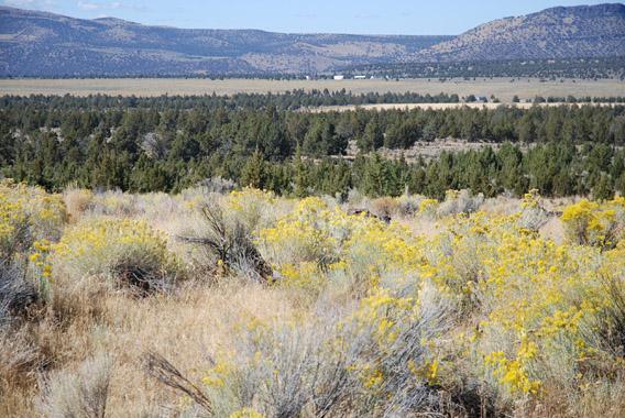 320 Acre Ranch
